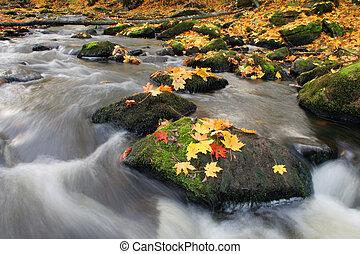 otoño sale, y, río