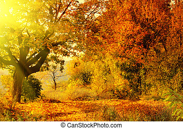 otoño, sol, bosque, rayo
