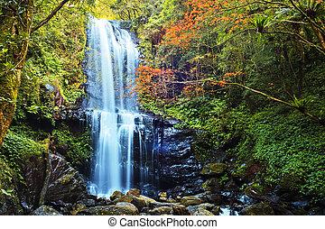 otoño, taiwán, cascadas