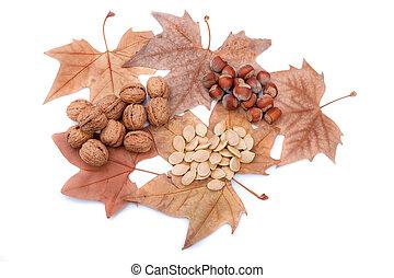 otoño, tema, con, permisos amarillos, nueces, y, calabaza, seeds., regalos, de, nature.