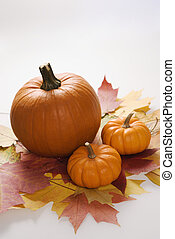 otoño, todavía, life.