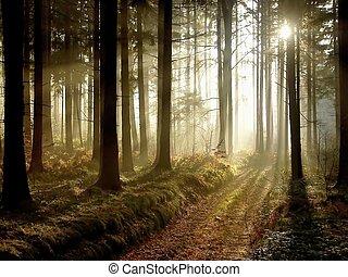 otoño, trayectoria, bosque, anochecer