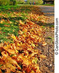 otoño, Trayectoria, hojas, arce, encuadrado