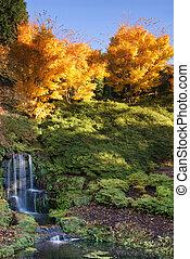 otoño, vibrante, maravilloso, cascada, paisaje