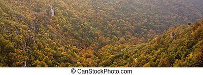otoños, colores, cubierta, el, valle