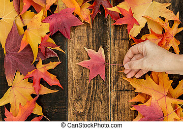 otoños, llega