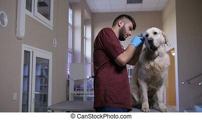 otoscope, examiner, oreille, vétérinaire, chien