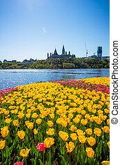 ottawa, tulpen, straatfeest