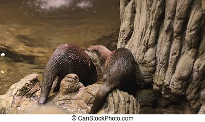 Otter near a water pond