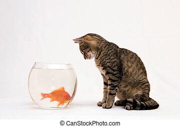otthon, fish., arany, macska