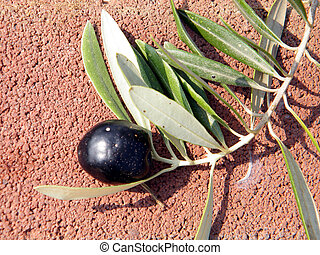 ou, branche, yehuda, olives