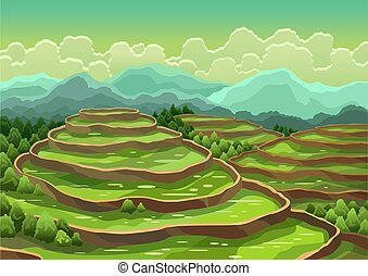 ou, céréales, champ riz, paysage, arrière-plan., récolte, rural, terraces., agriculture, thé, asiatique