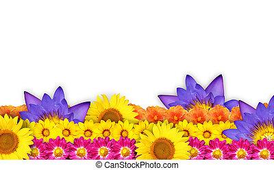 ou, fleurs, frontière, fleur, cadre, beau
