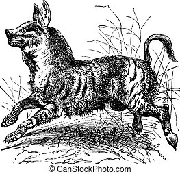 ou, hyaena, gravure, rayé, vendange, hyène