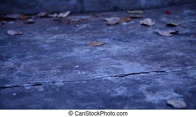 oud, cementeer vloer, met, droog, bladeren