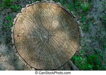 oud, dwarsdoorsnede, van, houten, logboek