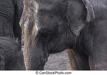 oud, elefant, afbeelding