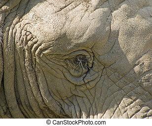 oud, elefant
