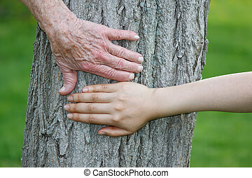oud, en, jonge, handen, de boomstam van de boom