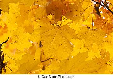 oud, foliage., herfst