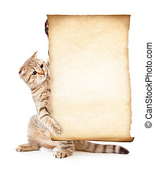 oud, kat, papier, leeg, perkament, of