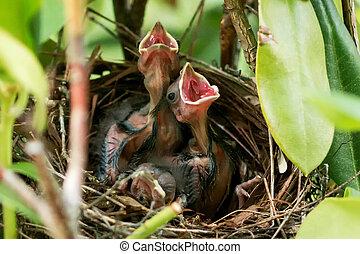 oud, monden, nest, dag, babay, hun, kardinaal, vijf, open, vogels