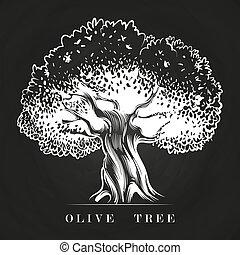 oude boom, hand, chalkboard, olive, getrokken