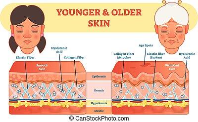 ouder, en, jonger, huid, vergelijking, diagram, vector, illustratie, scheme.