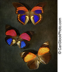ouderwetse , achtergrond, met, vlinder