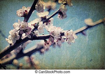 ouderwetse , apple-tree, bloemen, op, lente