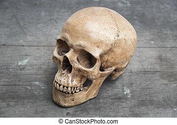 ouderwetse , beeld, schedels