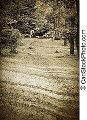 ouderwetse , bospaden
