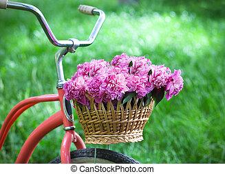 ouderwetse , fiets met mand, met, peony, bloemen