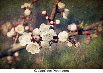 ouderwetse , sakura, bloemen, bloesems, op, lente