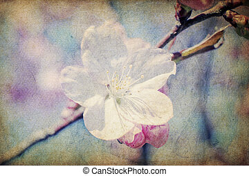 ouderwetse , sakura, bloemen, op, lente, macro