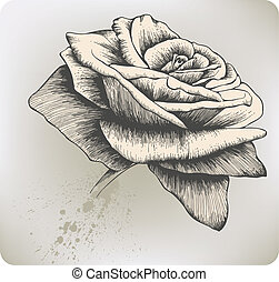 ouderwetse , vector, roos, hand-drawing.