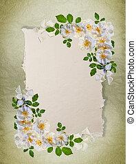 ouderwetse , witte , frame, rozen