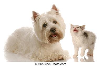 ouest, fond, chaton, blanc, région montagneuse, terrier