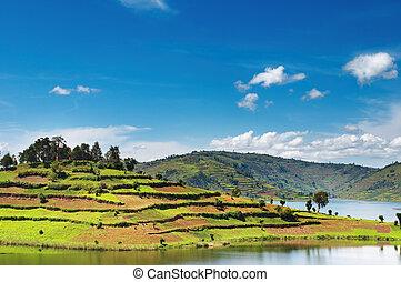 ouganda, lac, bunyonyi
