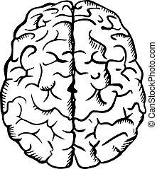 ouline, cerveau, croquis, style, humain