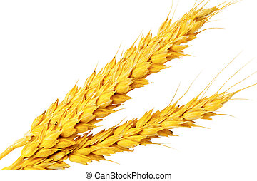 ?ouple of ears of wheat.Isolated over white.