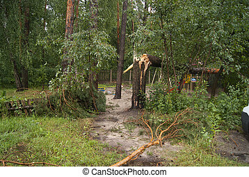 ouragan, après, branches, arbres