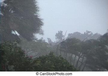 ouragan, paumes