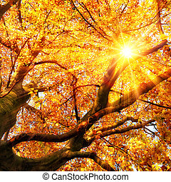 ouro, sol, folhas, outono, através, brilhar