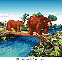 ours, marche, rivière, deux, croix
