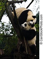 ours, panda, jouer