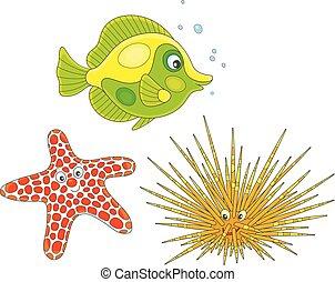 oursin, fish, mer, etoile mer