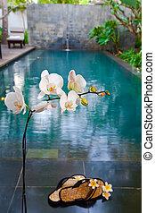 (out, focus), pantuflas, rama, florecer, orquídea, piscina, antes