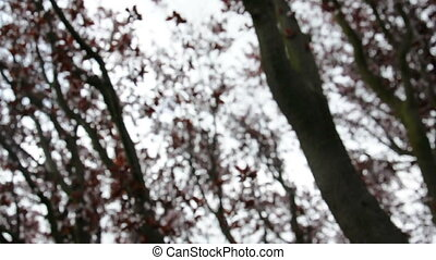 Out of focus tree branches move about in the wind