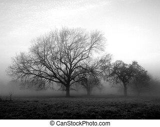 Early morning fog hugging the trees